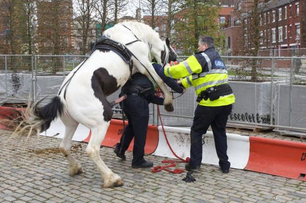 """c'est ce qu'on appelle la """"police montée""""... 1348585818_ATT11(09-25-17-07-06)"""
